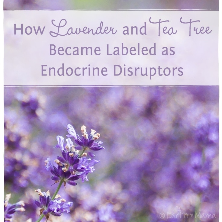 Are Lavender and Tea Tree Oil Endocrine Disruptors?  Lack of Evidence