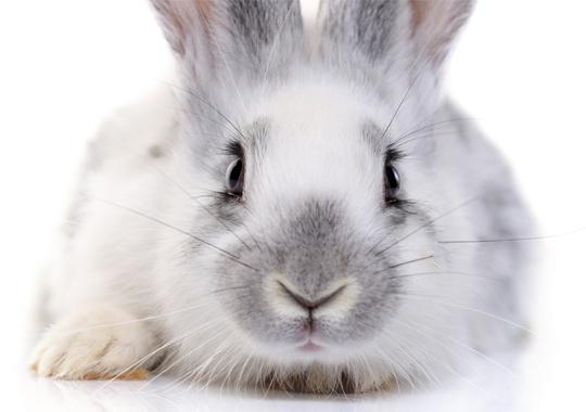 Cruelty-Free Cosmetics Act Passes in California Senate