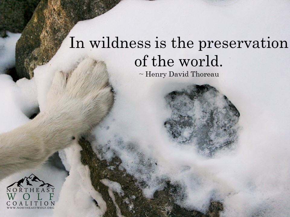 In Wildness is the Preservation of the World – Henry David Thoreau