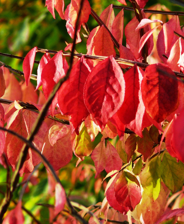 Autumn is a second spring where every leaf is a flower ~ Albert Camus