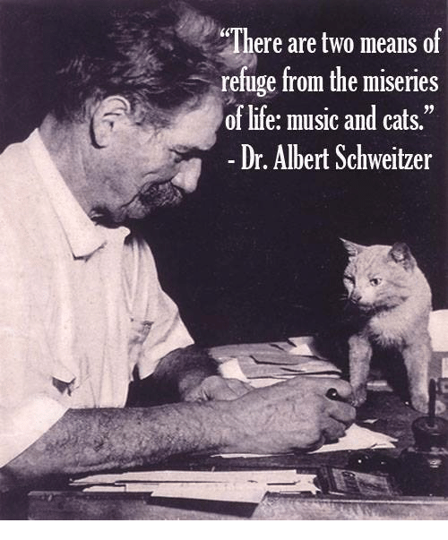 There are two means of refuge from the miseries of life: music and cats. – Albert Schweitzer