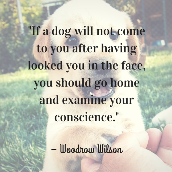 """""""If a dog will not come to you after having looked you in the face, you should go home and examine your conscience."""" – Woodrow Wilson"""