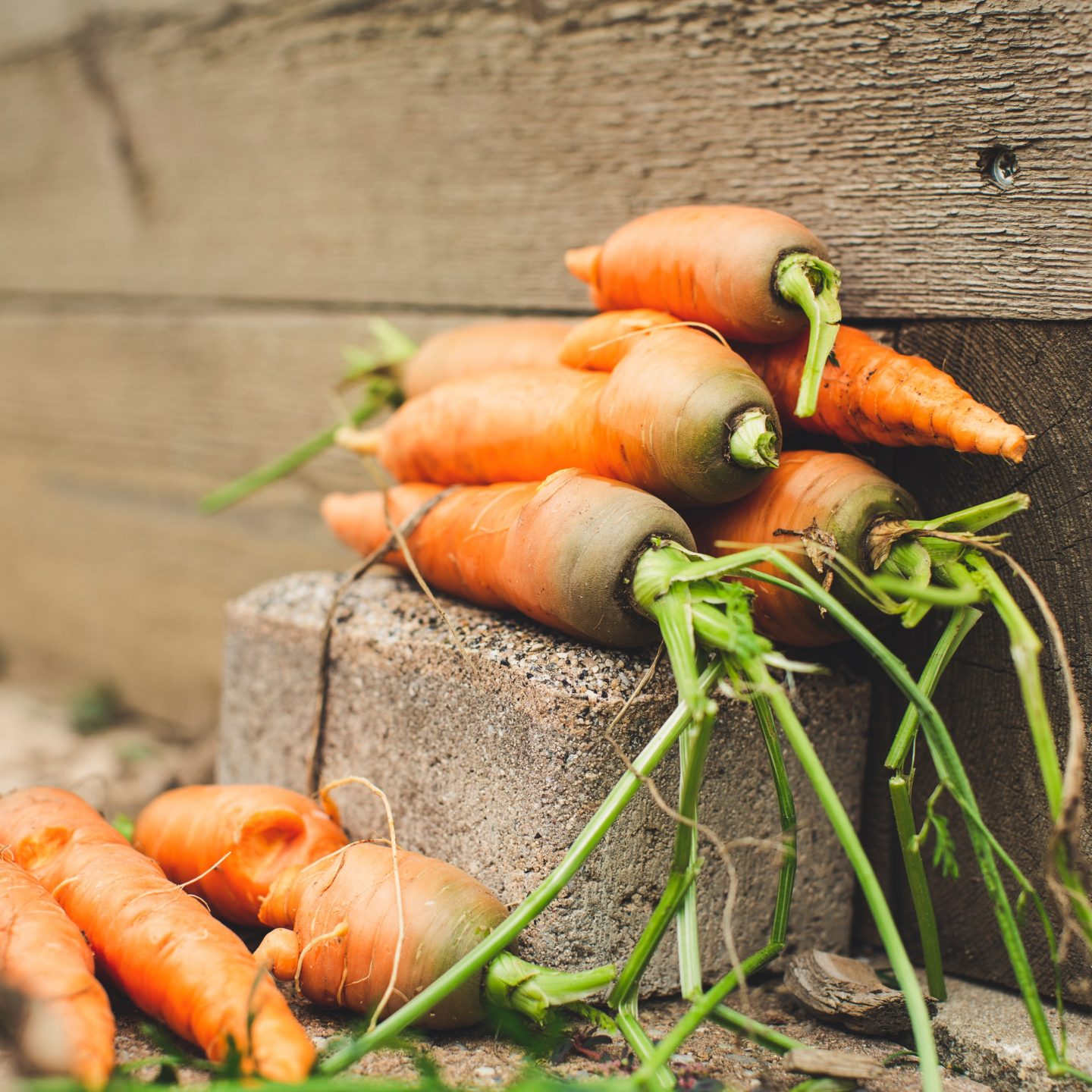 Carrot Seed Oil Uses and Benefits for Your Skin