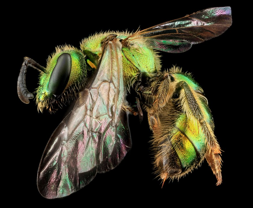 Study Shows How Prescribed Burns Benefit Bees